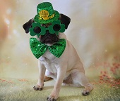 St Patrick's Day Novelties & St Patrick's Day Games