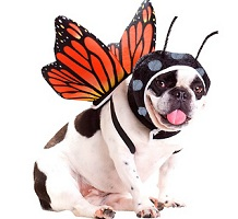 Pet Fancy Dress Costumes & Accessories Costumes
