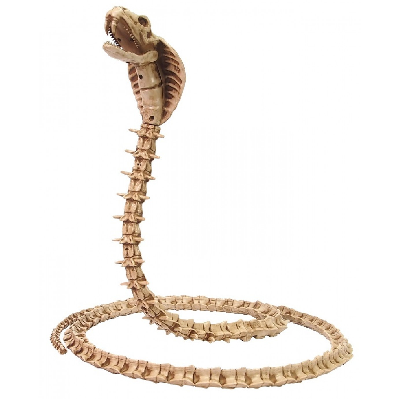 Snake Skeleton | General Decorations | Decorating ...