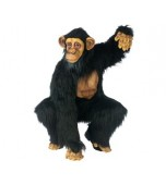 Costume - Complete Chimpanze